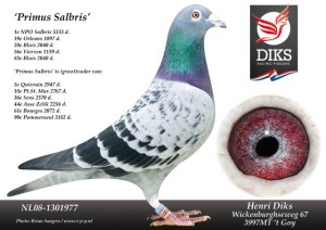 Primus Salbris