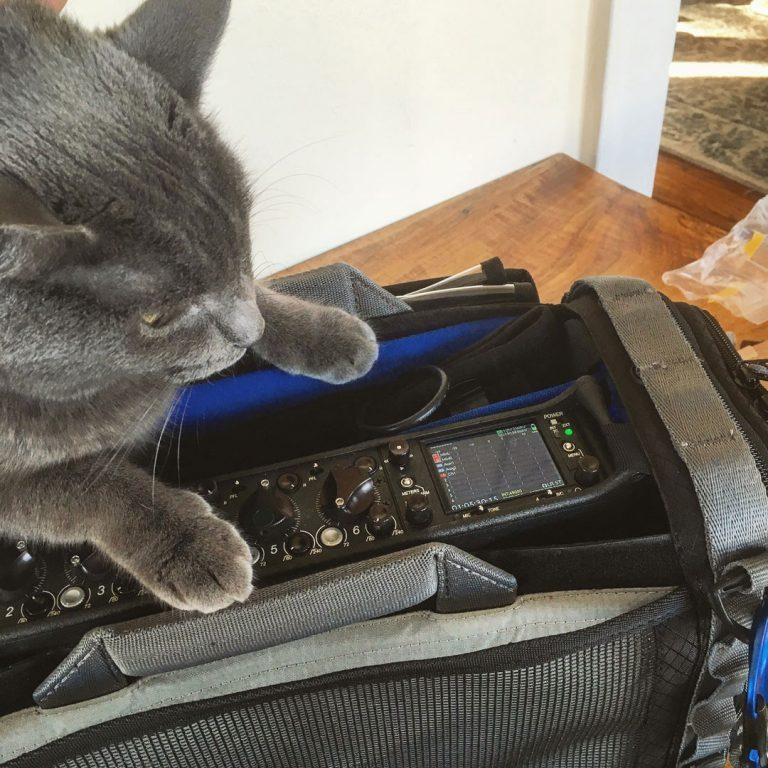 Production Sound Cat