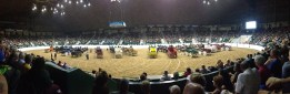 We love horse shows.