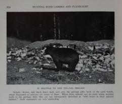 """""""Il est de la brigade des boîtes de conserve"""". Grizzly. Photographie George Shiras, publiée dans """"Hunting wild life with camera and flashlight""""."""
