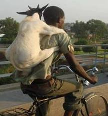 man and a goat