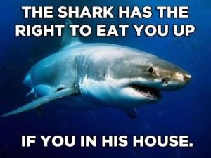 shark in his house