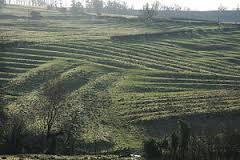 field of folk 3