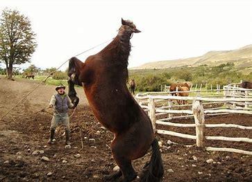 feisty horse