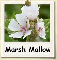marsh-mallow