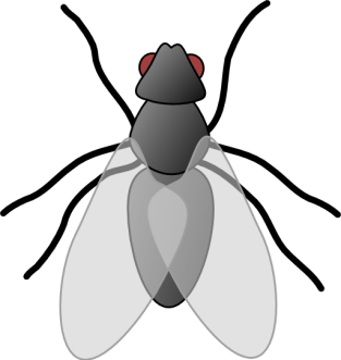 clipart-fly-01-512x512-db90