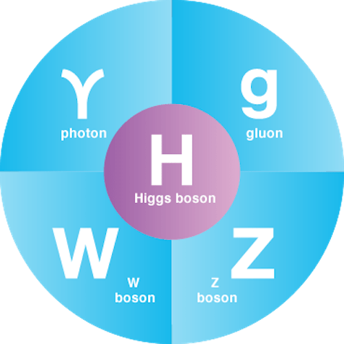 fundamental_bosons
