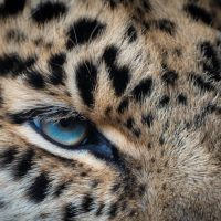The wild eye is watching you after noticing your neighbour