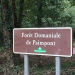 Wald Paimpont