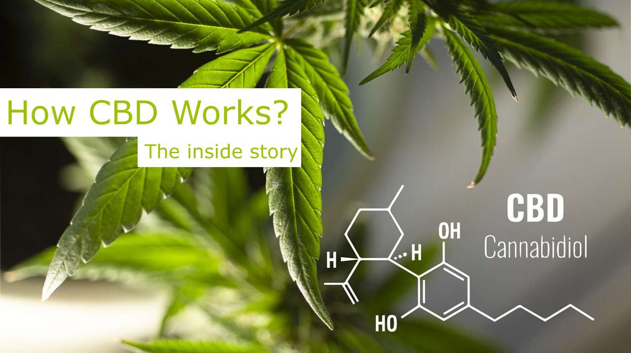 herbforty herb40 video explains what is cbd, how cbd works and what are the benefits of cbd oil