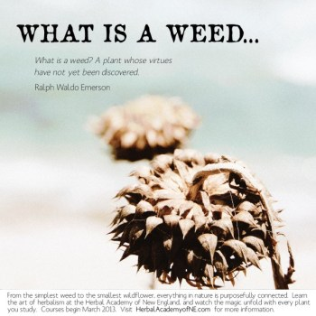 What is a weed social