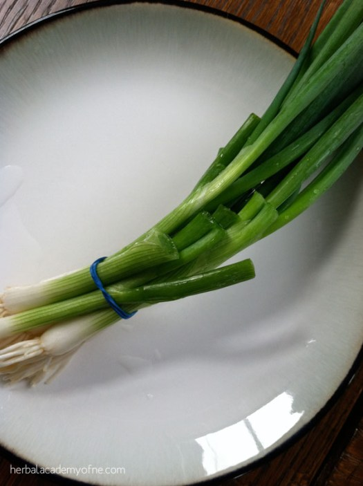 growing green onions preview