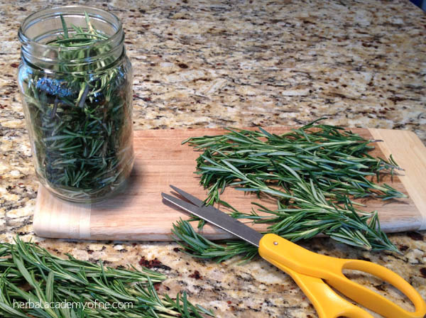 rosemary herb infused oil