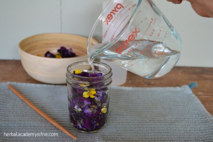 Making a Violet Tincture - Herbal Academy of New England