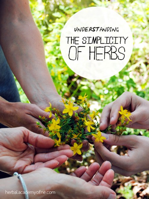 Understanding the Simplicity of Herbs - Herbal Academy of New England