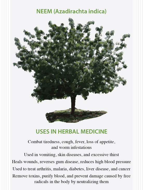 The Health Benefits of Neem - article by the Herbal Academy of New England
