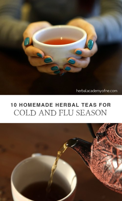 Ten Homemade Herbal Teas for Cold & Flu Season - Herbal Academy of New England