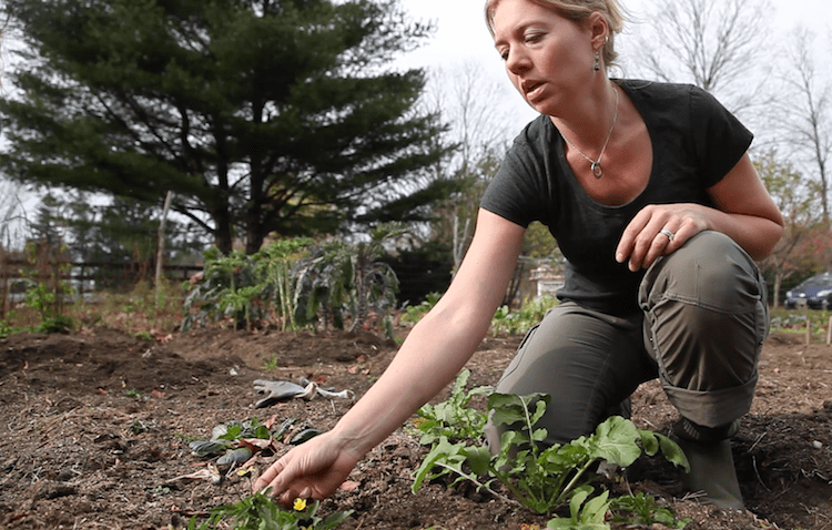 Building Relationships with Plants - Herbs Work as our Companions and Allies