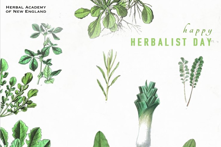 Thank An Herbalist Day | Herbal Academy | Thank an Herbalist Day on April 17th gives us the perfect opportunity to share with the people who have helped shaped us! Print these cards or give a gift!