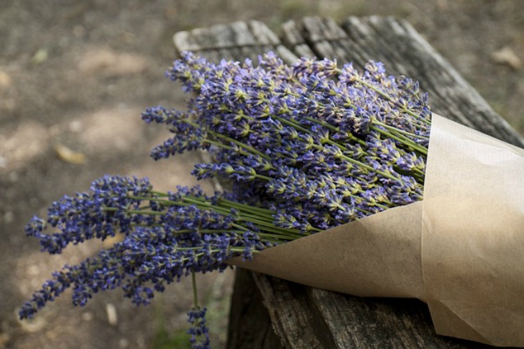 The Benefits Of Lavender In The Family Home: Emotional Support