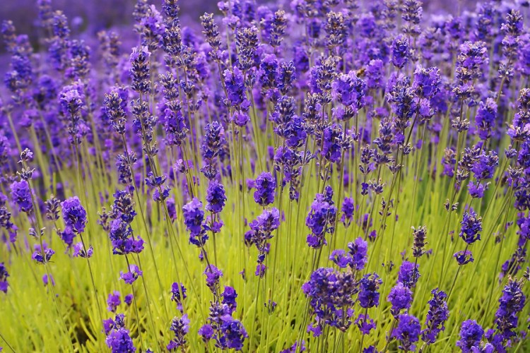 Top Herbs for Stress