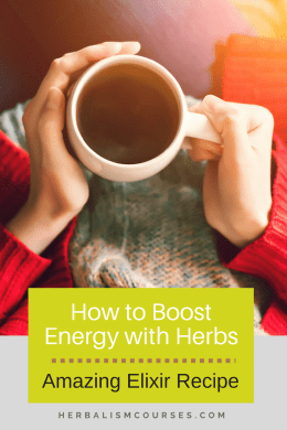 Top Herbs for Energy