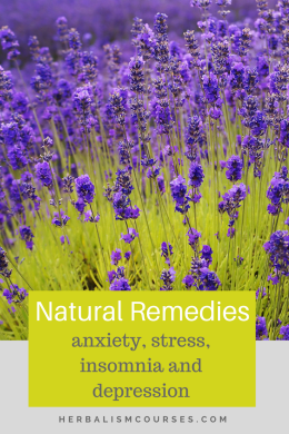 These natural remedies help to reduce stress, anxiety, insomnia and depression. The herbs can be taken as tea or tinture. #stress #anxiety #insomnia #herbalism #naturalremedies #herbalremedies #herbs