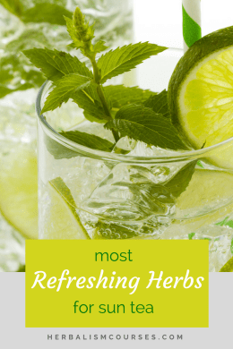 While any herbal leaf, flower or berry can be used to make herbal sun tea, the best herbs for sun tea are those that are refreshing, not only in taste but to your body as well. These plants cool the system and help to bring the body temperature down. #SummerHerbalTeas #SunTeaHerbs #SunTeaRecipes #MakeSunTea #Herbalism #HerbalMedicine