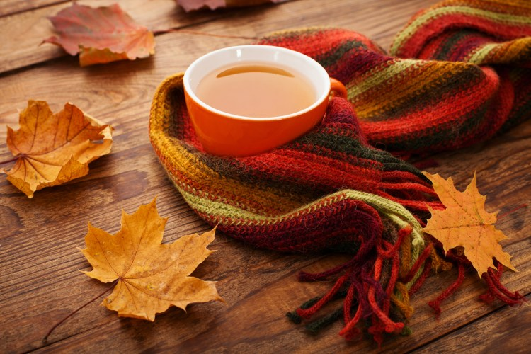 Enjoy this fall spice elixir recipe as much for it's taste as it's herbal medicine. #FallSpiceRecipe #ElixirRecipe #MedicinalSpices #HerbalMedicineRecipe #Herbalism #HerbalMedicine #HerbalismCourses #OnlineHerbalCourse