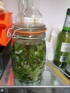 Mugwort infusing into wild fennel vodka
