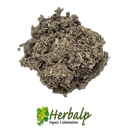 infusion-artichaut-herbalp