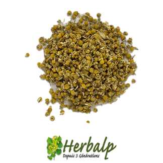 infusion-camomille-matricaire-herbalp