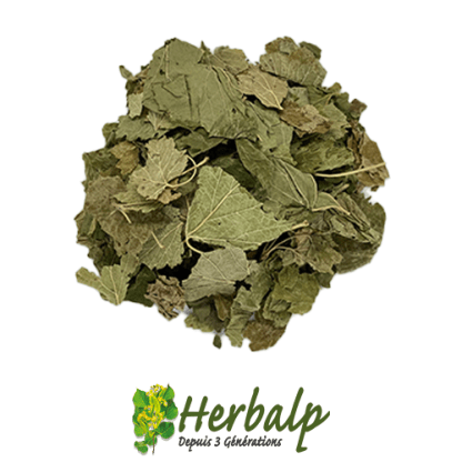 infusion-cassis-herbalp