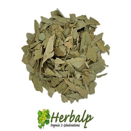 infusion-eucalyptus-coupe-herbalp