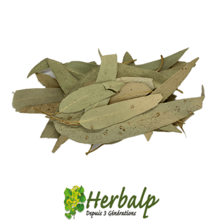 infusion-eucalyptus-feuilles-entieres-herbalp