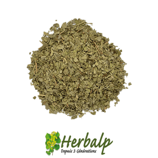 infusion-frene-feuilles-herbalp
