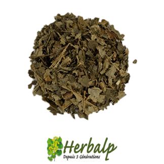 Infusion-hamamalis-herbalp
