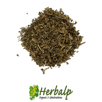 infusion-ortie-blanche-herbalp
