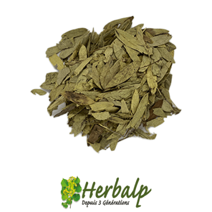 infusion-sene-herbalp
