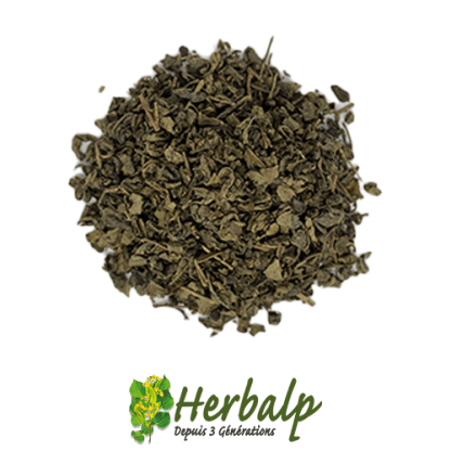 infusion-The-vert-menthe-herbalp