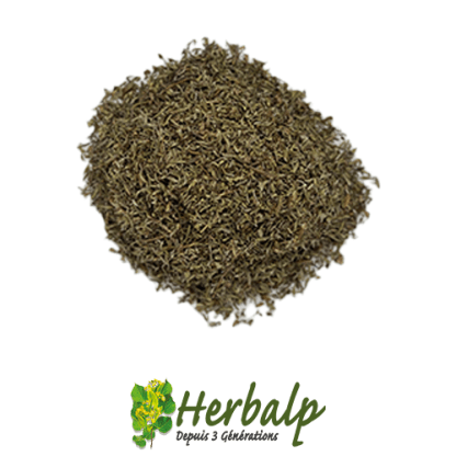infusion-thym-herbalp
