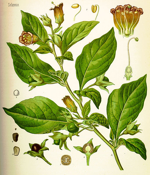 How are herbs used in medicine?