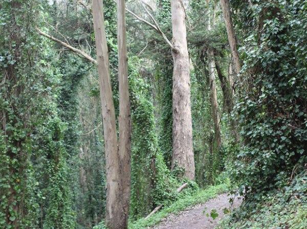 Presidio Bay Area Ridge Trail