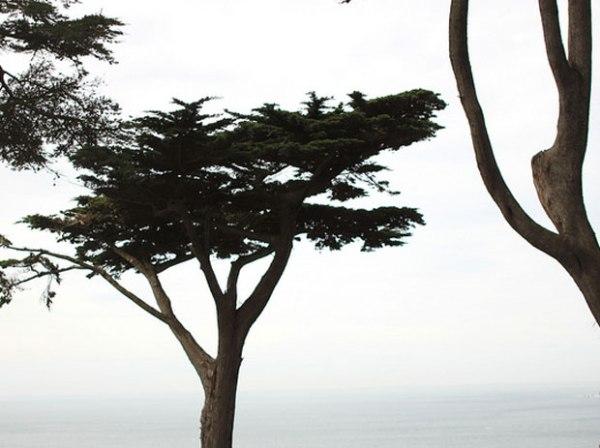 Presidio View, Pacific Ocean