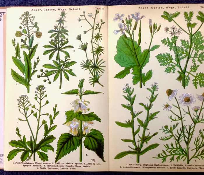 A Trace of Chamomile: Marian Hedwig Mülberger's Spring Flowers