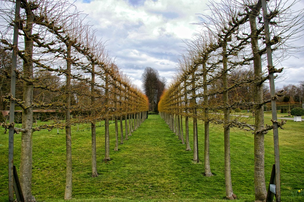 Pleached lime trees, Erddig. Photo credit: Jean Mottershed. (License: CC By-NC-ND 2.0)