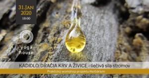 WORKSHOP: Kadidlo, dračia krv a ďalšie živice: spoznaj liečivú silu stromov @ Yoga House Bratislava | Bratislavský kraj | Slovensko