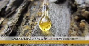 Kadidlo, dračia krv a živice - prednáška s ochutnávkou živačky @ Obchodík bez obalu | Trencin | Slovakia