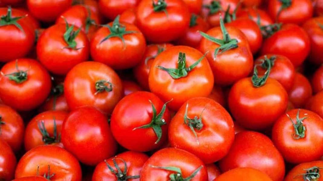 manfaat buah tomat - herbatani