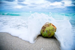 waves splashing against a green coconut on the beach